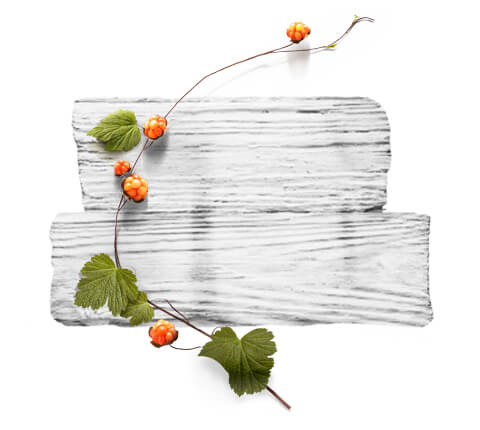barnangen_com_products_nordic_care_range_ingredients_cloudberry_480x430